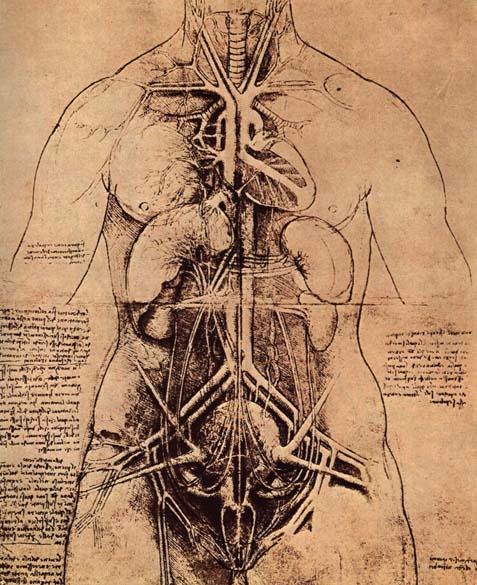 woman-organs