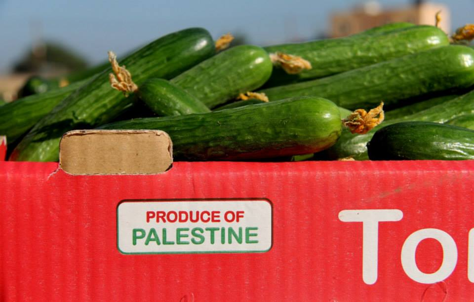 Gaza cucumbers nov 6 2014
