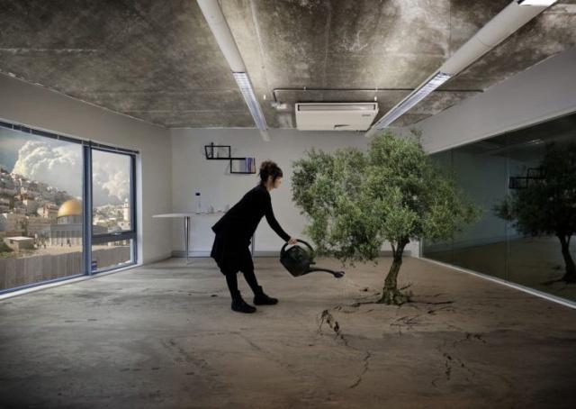 20120412_SANSOUR-Larissa-Nation-Estate-Olive-Tree